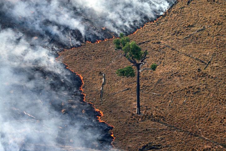Lángoló legelő az Amazonas egyik kiirtott részén