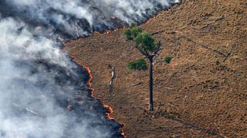 Végül mind belehalunk, ha pár dollárért kiirtják az esőerdőt