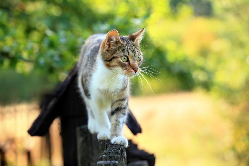 Érdekes dolgot figyeltek meg a macskák viselkedésén: sokan nem gondolnák