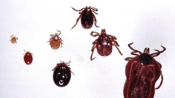 Tévhitek nehezítik a Lyme-kór elleni védekezést