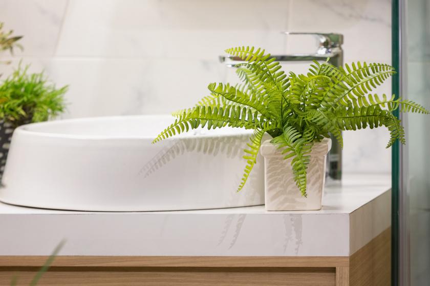A szobapáfrány ideális fürdőszobanövény. Jól tűri a hőmérséklet-ingadozást a fürdőben, a párát pedig egyenesen imádja. A különböző páfrányfélék fényigénye eltérő lehet, de többnyire megelégszenek visszafogott mennyiségű napfénnyel.