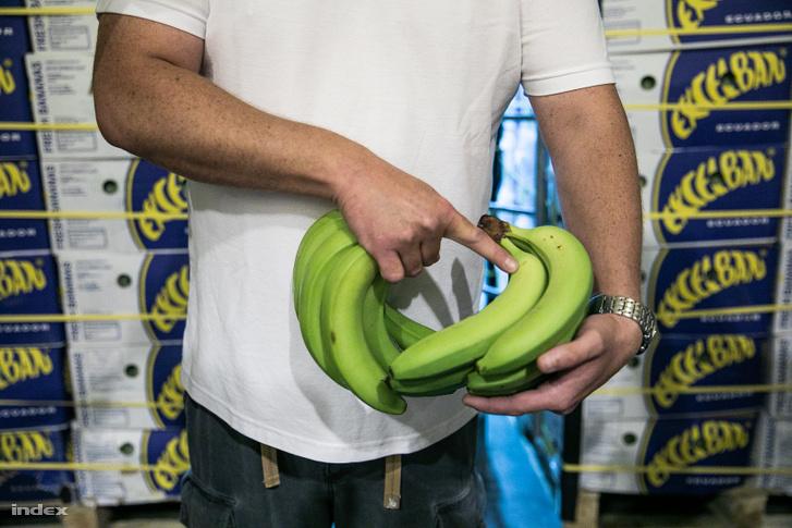 A banán az oldalán kezd el érni, ha pedig megfázik, szürke lesz a héja.
