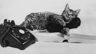 Élő macskából építettek telefont a tudomány nevében