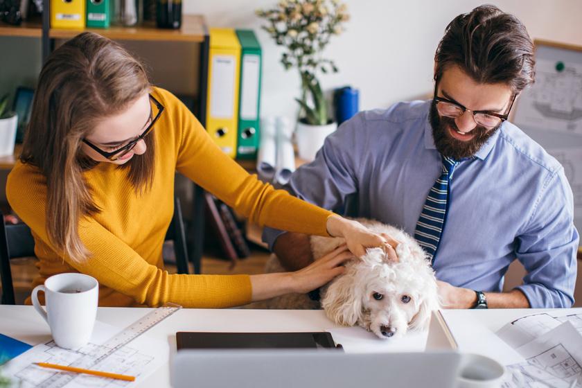 Gyökeresen megváltozik tőle az iroda hangulata: egyre többen viszik dolgozni a kutyájukat