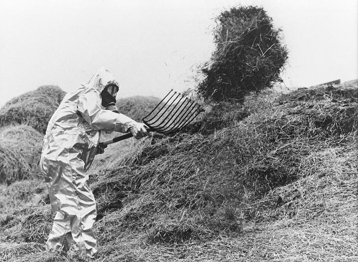 Egy sugárvédő ruhát viselő svéd gazda a radioaktív felhő által fertőzött takarmányt cseréli 1986 júniusában, néhány nappal a 4. számú reaktor robbanása után.