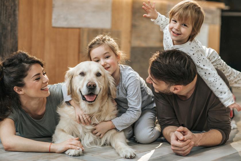 Ezekből a fajtákból válhat a legjobb családi kutya: így mondják, de a keverék ebeket is imádjuk