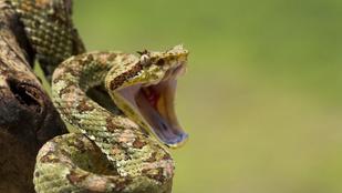 Ha megmar egy kígyó: mit kell tenni, és mit nem szabad?