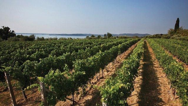 Milyen borokat kóstoljunk a Garda-tónál?