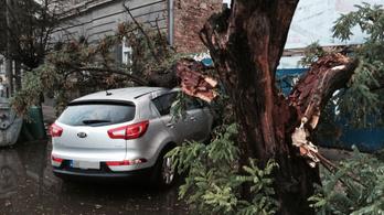 1,9 milliós kár az autóra dőlt fa miatt