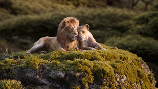 Az oroszlánkirály és Beyoncé nagyon, nagyon szeretnék, hogy zokogj
