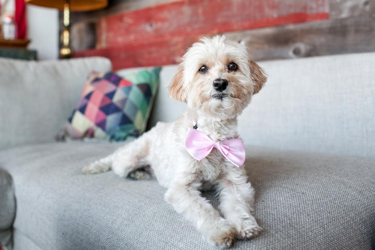 nyakkendos-kutya