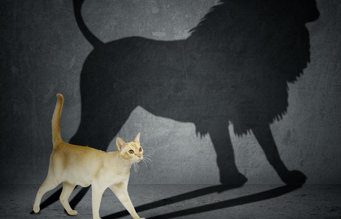 oroszlan cica 1