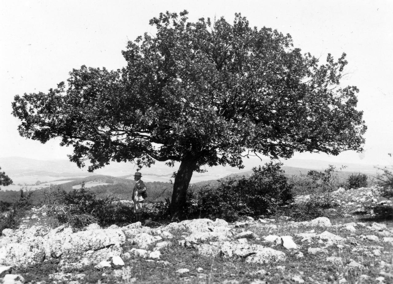 1939. Magyarország, Aszófő kilátás az Ágas-hegyről a Pécselyi-medencére. A viharvert tölgyfa alatt Cholnoky Jenő földrajztudós.