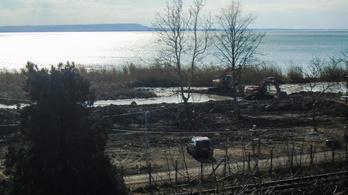 Helyre kell állítani a letarolt, kiemelten védett nádast a Balatonnál