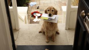 Elég jó gazdája vagy a kutyádnak? Teszteld!