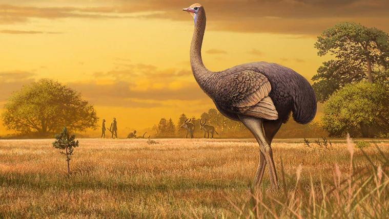 A struccnál háromszor nagyobb madár élt egykoron Európában