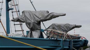 Hamarosan újra kifutnak a japán bálnavadász hajók
