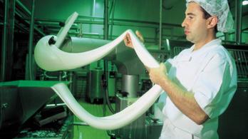 Napi 12 tonna mozzarella fog készülni Bartusekpusztán