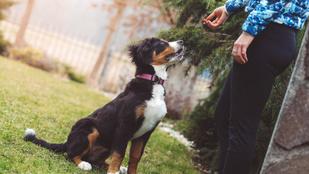 10 dolog, amit a kutya tanításában a jó gazdák megfogadnak