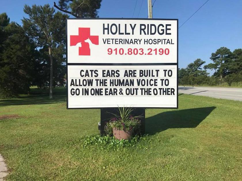 A macskákat úgy tervezték, hogy az egyik fülükön bejusson az emberi hang, a másikon pedig távozzon.