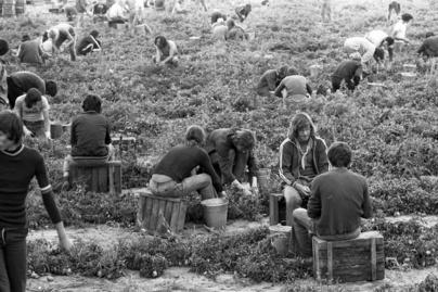 krumpliszedes-1976