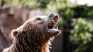 Medve támadt meg egy orosz férfit, mire az leharapta az állat nyelvét