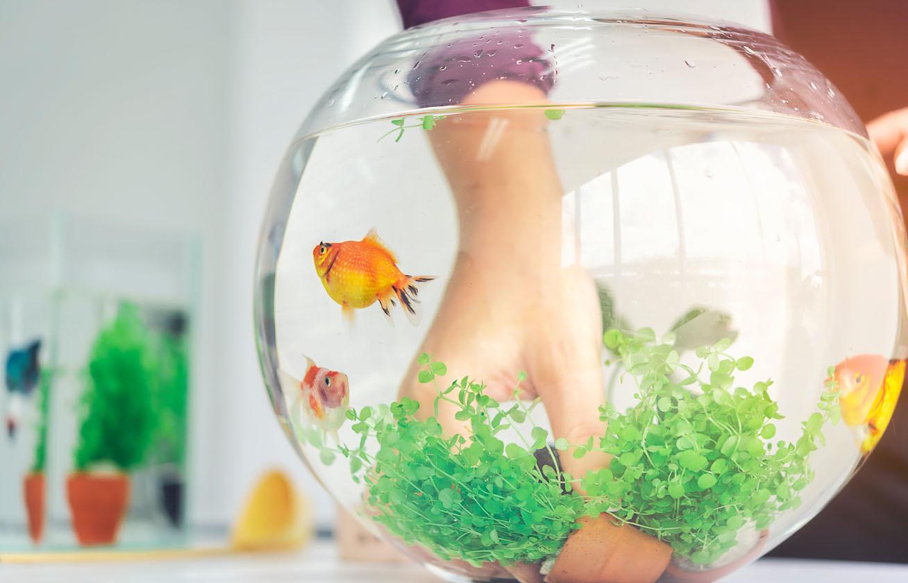 akvárium 1