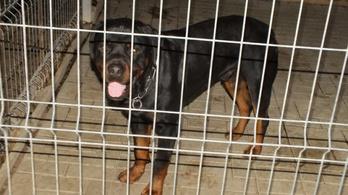 Rátámadt egy kutya egy kétéves kislányra, életveszélyes állapotban van