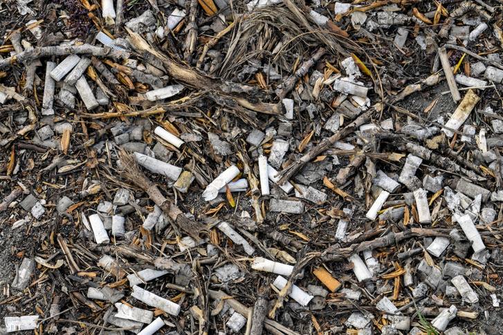 Eldobott cigarettavégek százai egy gondozatlan területen a IX. kerület Ecseri út közelében 2019. április 6-án