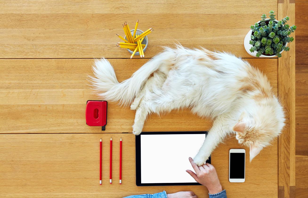 dolgozo macska cover