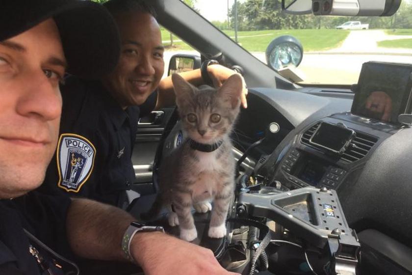 Fánk, a mancsőrmester valaha menhelyi cica volt, ma viszont a rendőrség tiszteletbeli tagja.