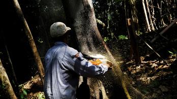 Hatvan százalékkal több esőerdőt vágtak ki eddig idén Brazíliában