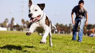 Innen tudhatod, jó iskolát találtál-e a kutyádnak