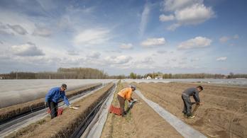 Csökkent, de így is tízezres nagyságrendű a mezőgazdasági munkaerőhiány