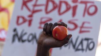 Rabszolgák szedik Olaszországban a spagettiszószba valót