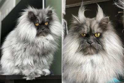 juno-macska