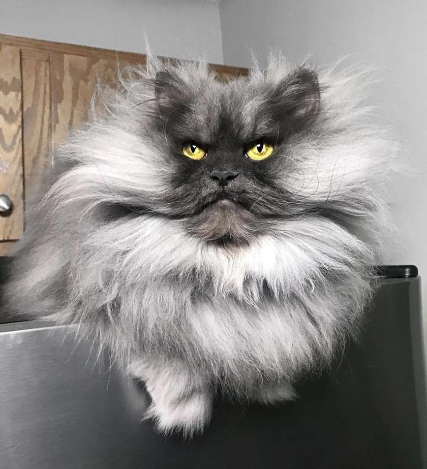 hogyan készítsünk egy macskát fogyni?