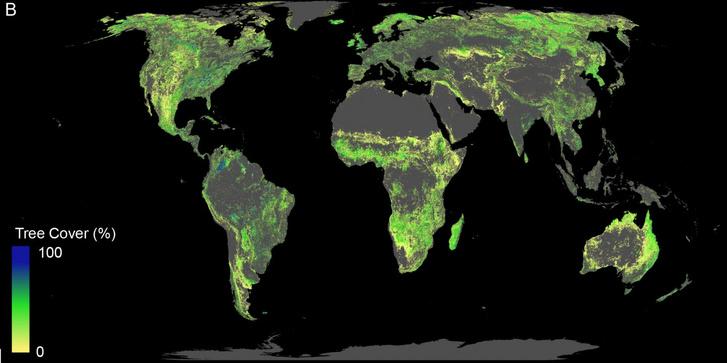 A térképen a potenciálisan visszaállítható erdőket mutatja, kivéve a sivatagi, mezőgazdasági és városi területeket