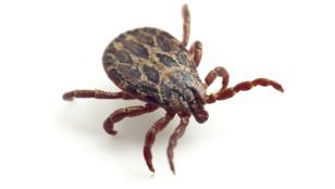 Így ismerd fel a kullancsok által terjesztett Lyme-kórt