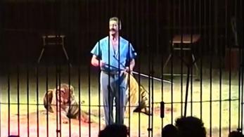 Tigrisek tépték szét az idomárjukat egy olasz cirkuszban