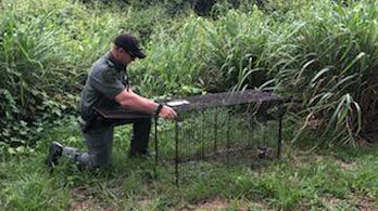 Több mint száz kutyaharapás végzett egy floridai férfival