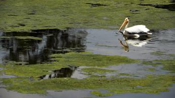 Bioműanyagot lehet majd gyártani algából
