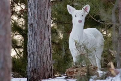 albino-allatok-oz