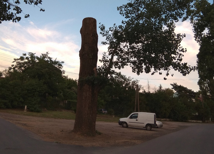 Félbevágott fa Veresegyházon: mindent lehet