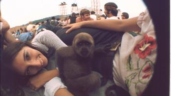 Továbbra sem tudják hol megrendezni a Woodstock 50-et