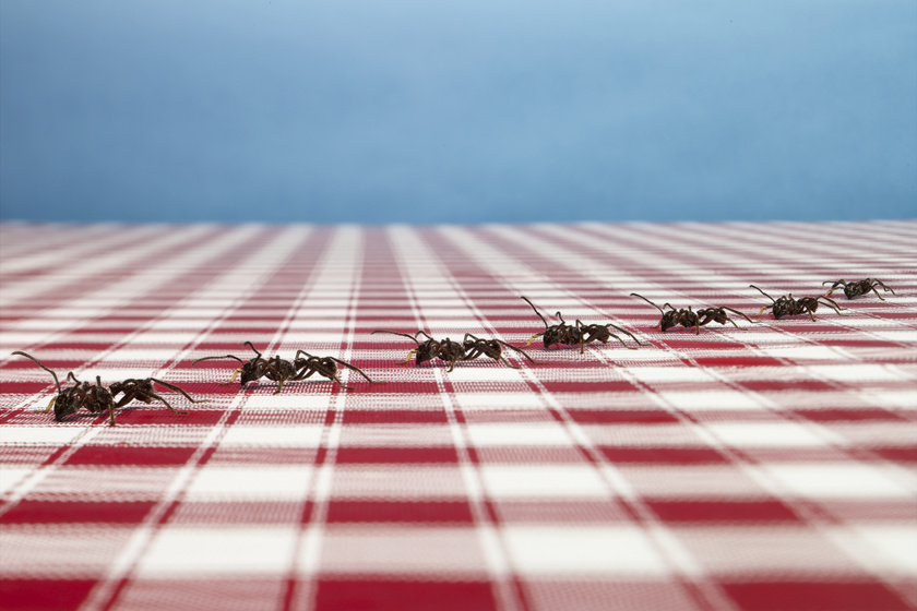 Honnan jönnek a hangyák, és hogy lehet megszabadulni tőlük? Ezt teheted az invázió ellen