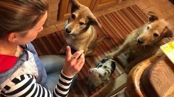 A kutya embert, a törpemalac stratégiát követ
