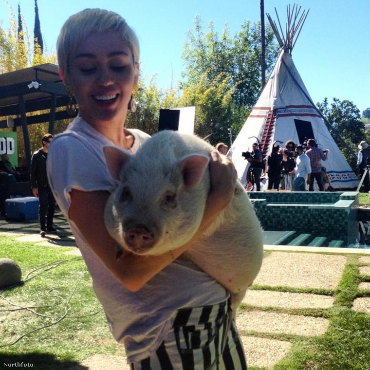 Miley és Pig Pig