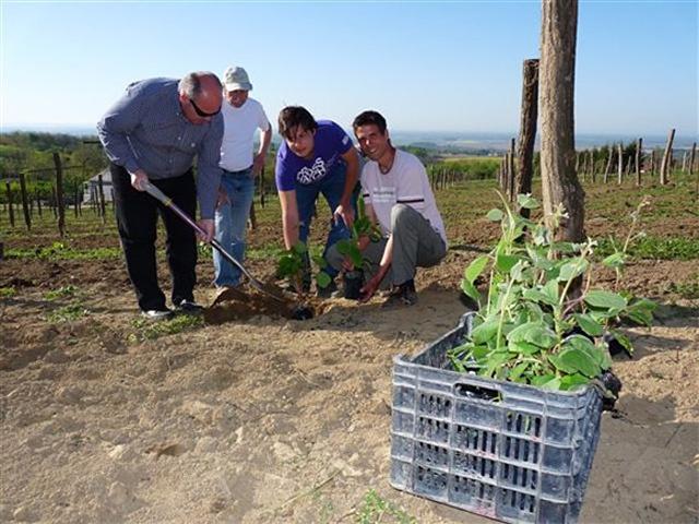 Németh Géza polgármester (balról) is elültethetett egy növényt. Mellette Varga János, Miklós Ákos és Harcz Endre