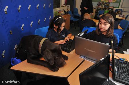 tk3s sn311 dog school 6